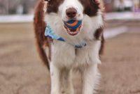 American Kennel Club Dog Breeders