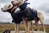 Dogo Argentino Price