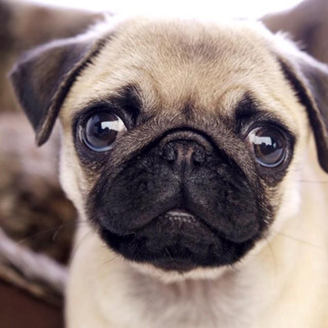 List of 150 Popular Female Dog Names
