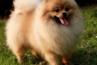 List of Female Dog Names With A