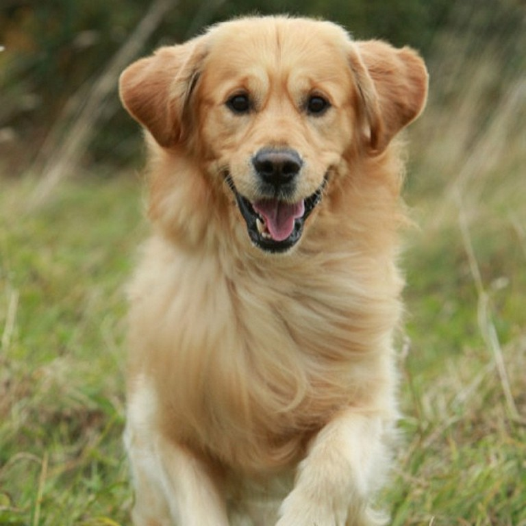 List of Female Dog Names With D
