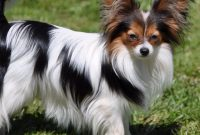 List of Female Dog Names With I