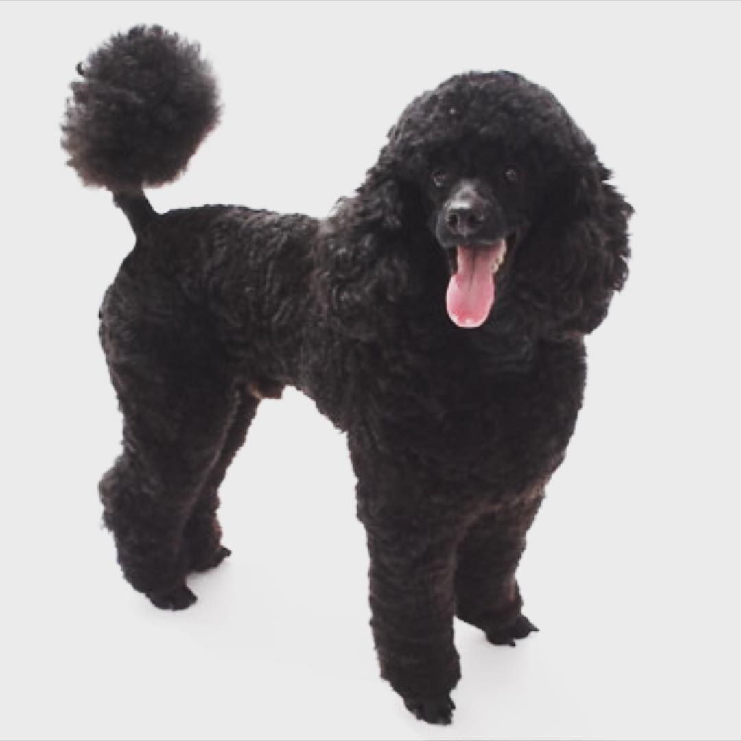 List of Female Dog Names With P