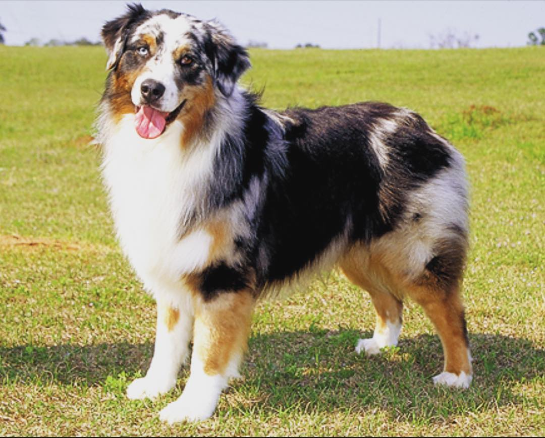 List of Female Dog Names With Q