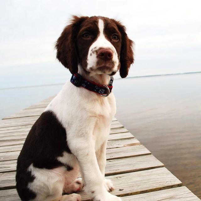 List of Female Dog Names With U