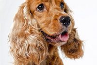 List of Female Dog Names With W