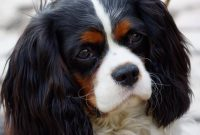 List of Female Dog Names With Y