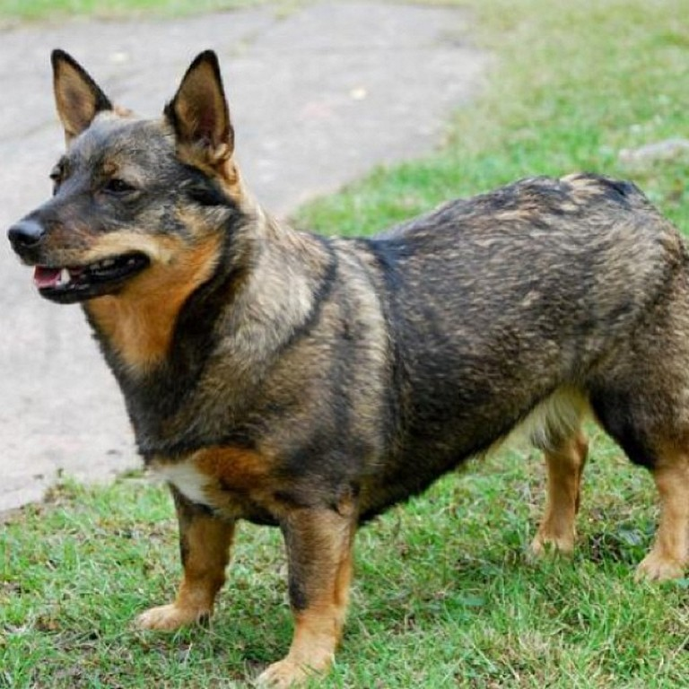 List of Male Dog Names With U