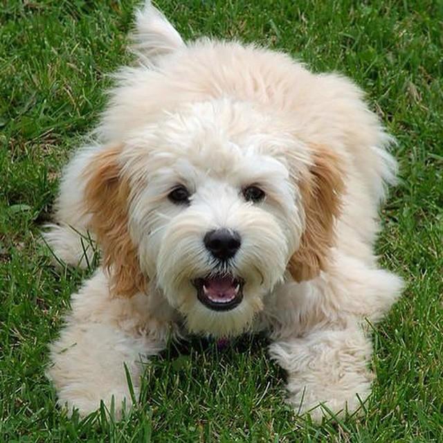 List of Unique Female Dog Names