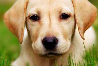 List of Unique Male Dog Names