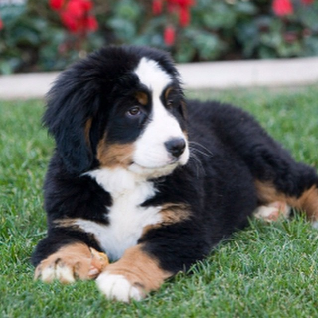 Pastoral Dog Breeds Pictures and Names