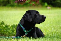 List of Black Dog Names 2017 With K