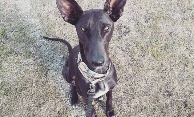 List of Black Dog Names 2017 With Q