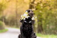 List of Black Dog Names 2017 With R