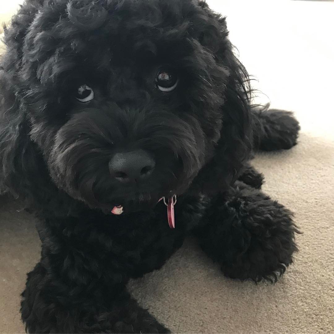 List of Black Dog Names 2017 With S