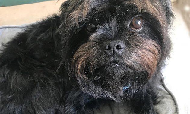 List of Black Dog Names 2017 With U