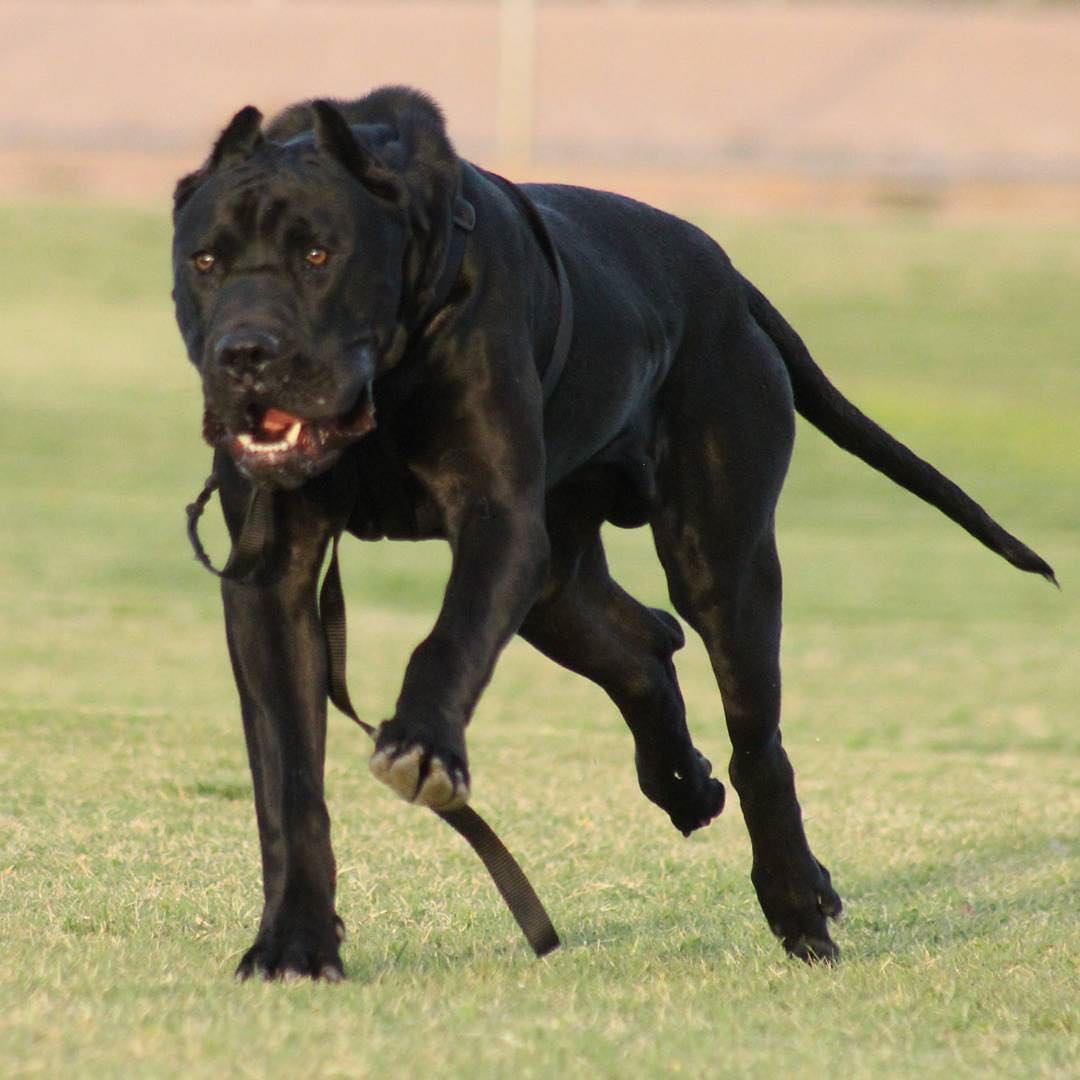 List of Black Dog Names 2017 With W