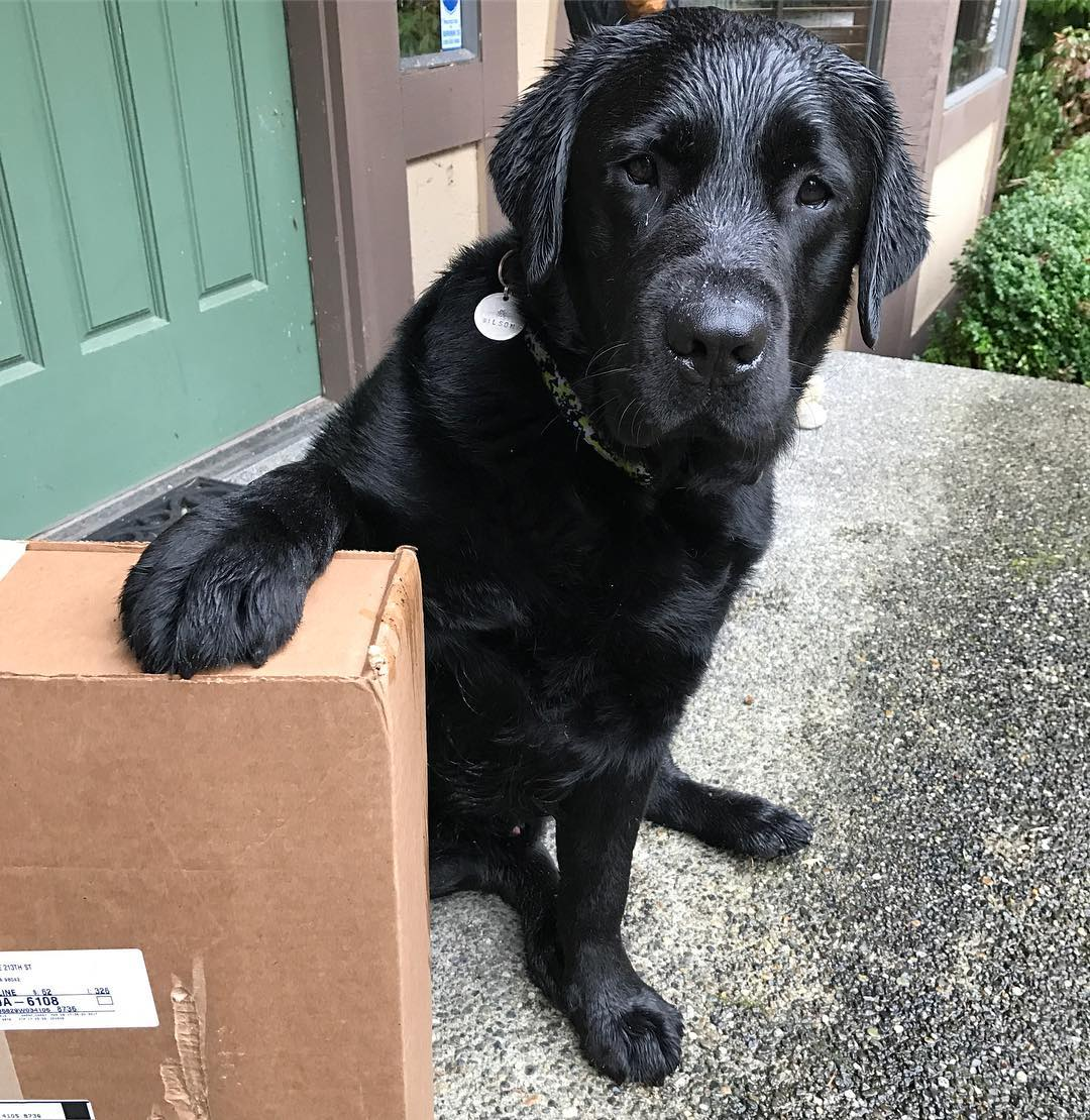 List of Black Dog Names 2017 With Y