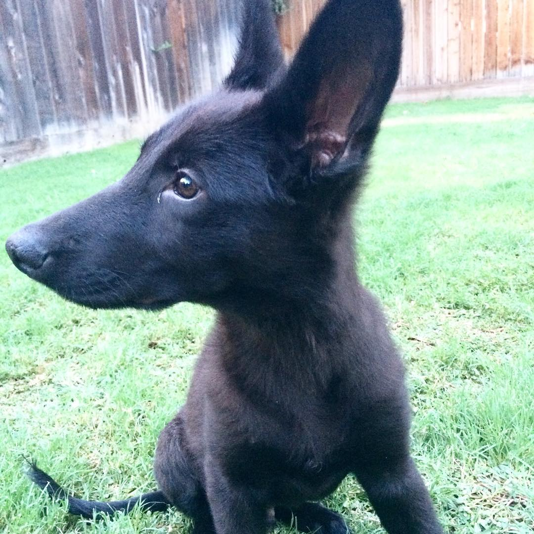 List of Black Dog Names 2017 With Z