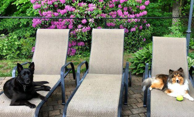 german sheprador puppies for sale