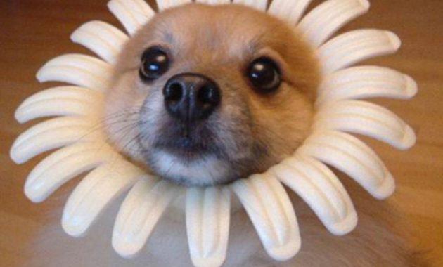 buy a puppy near me