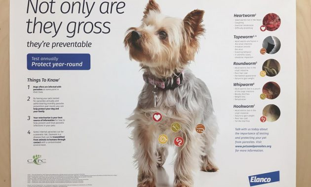 dog tapeworm treatment home remedy