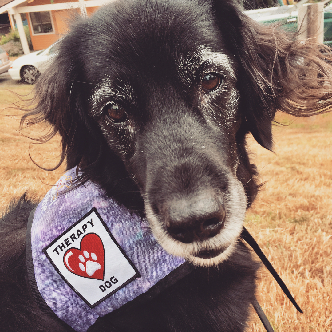 how do you get your dog registered as a therapy dog