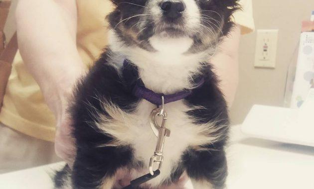 puppy vaccination schedule alberta