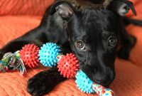 safe chew toys for puppies
