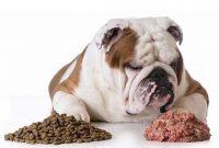 large breed puppy feeding chart