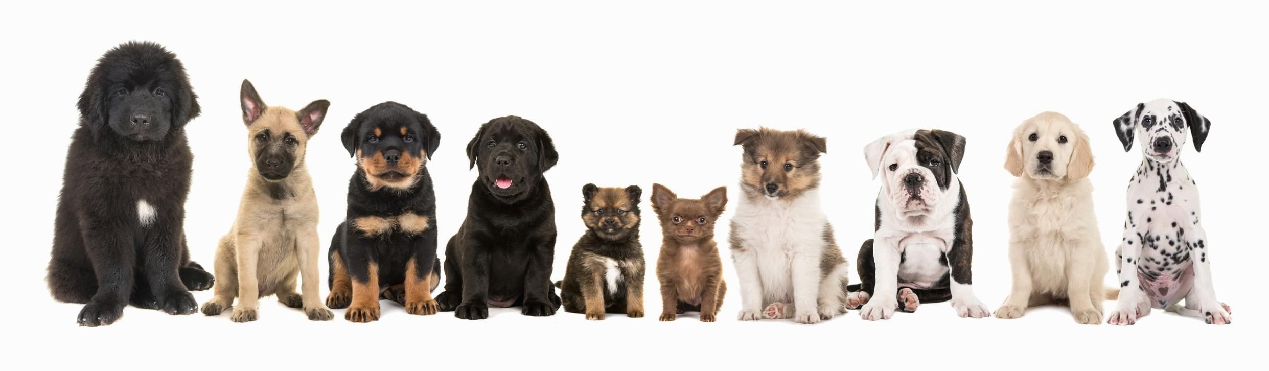 1517655557 Applying For A Supply Number Dog Breeders Register.jpg