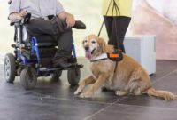 1517657298 Service Assistance And Therapy Dogs What Is The Difference.jpg