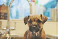 1517668142 Puppy Ear Infections Causes Symptoms And Treatment.jpg