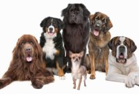 1517669994 Blue Ribbon K7 Academy Dog Trainer Puppy Service And Therapy Dogs.jpg