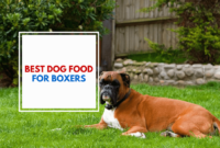 1517670302 Best Dog Food For Boxers The Palace Dog.png