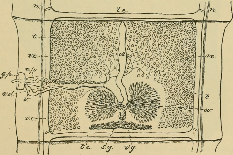 1517670944 Image From Page 12 Of Diseases Of Cattle Sheep Goats And Swine 12.jpg