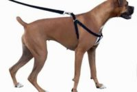 1517759445 Top 13 Best Dog Harnesses In 13.jpg